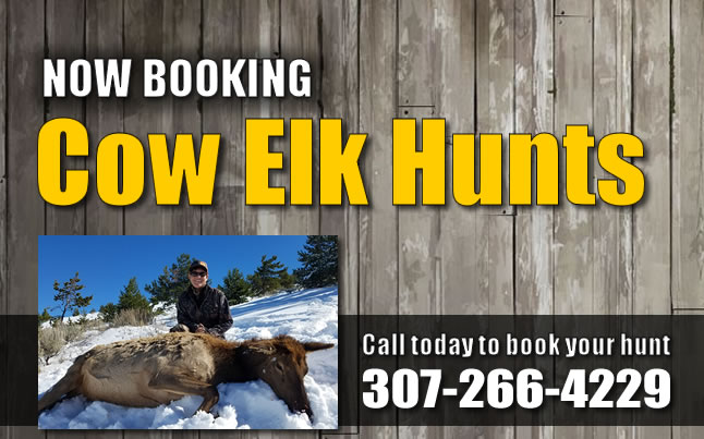 cow elk hunts popopen2